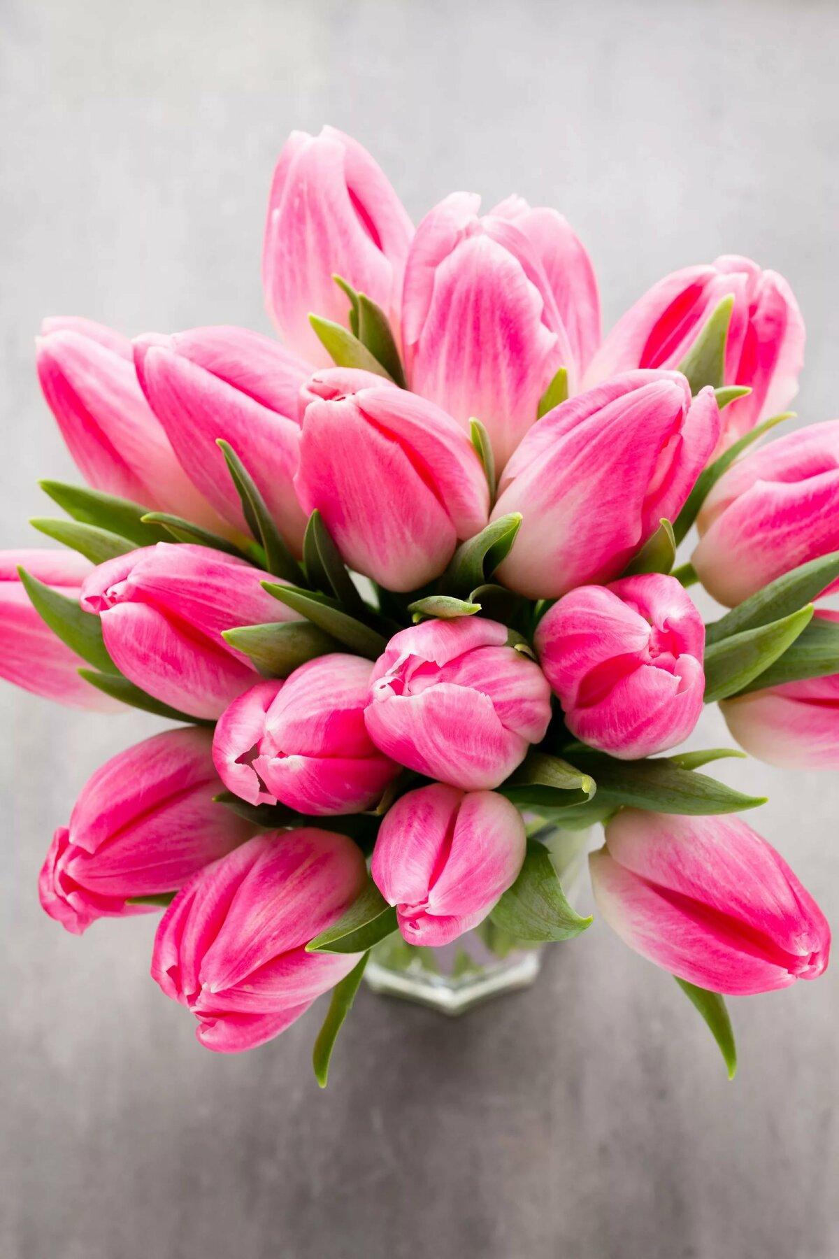 фото с тюльпанами на телефон ничего
