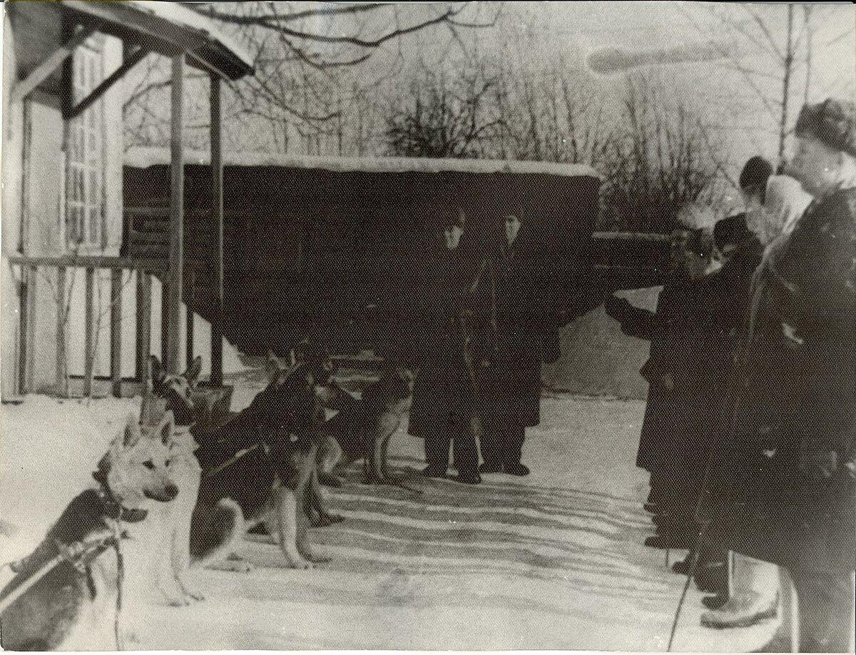 Подготовка собак-поводырей Купавна