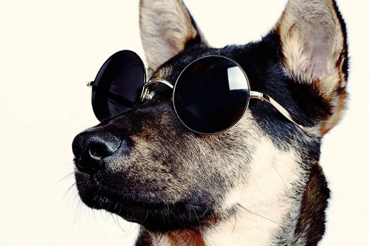 могут картинки собачки крутые красивые интересные