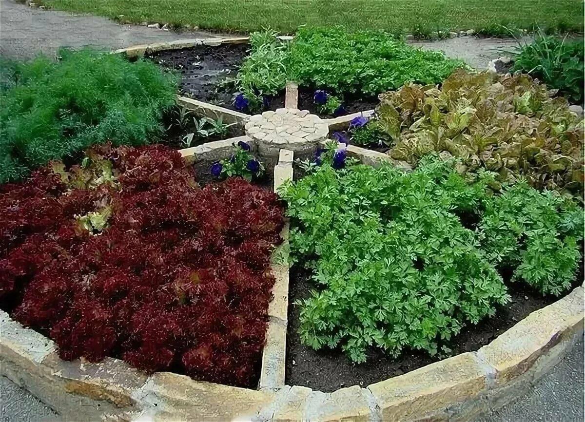 Пряные травы в саду и огороде фото и название