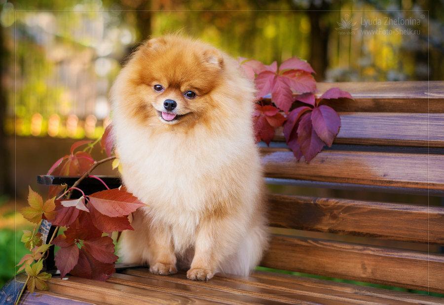 питание красивые фото собак шпица арки квартире это