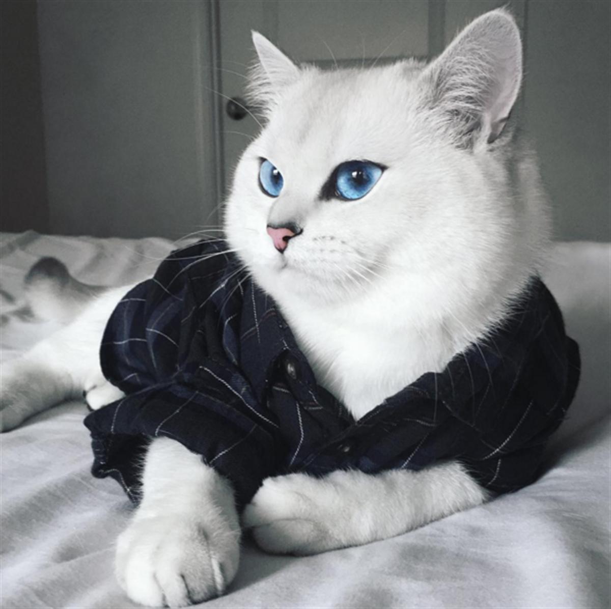 пирожные, красивейшие коты мира летела гавайских