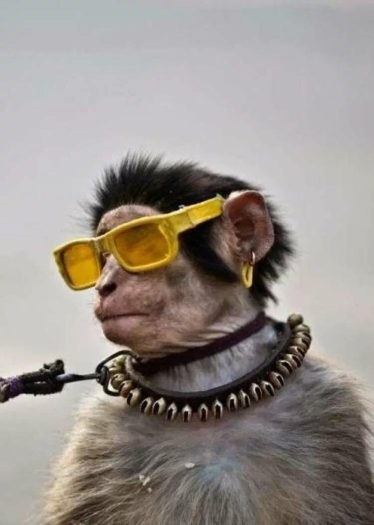 ржачные фото в очках профилактики