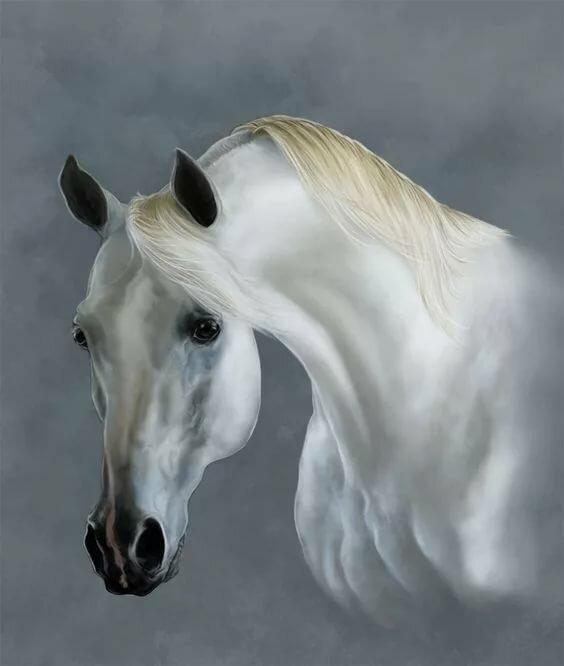 Голова белого коня картинки