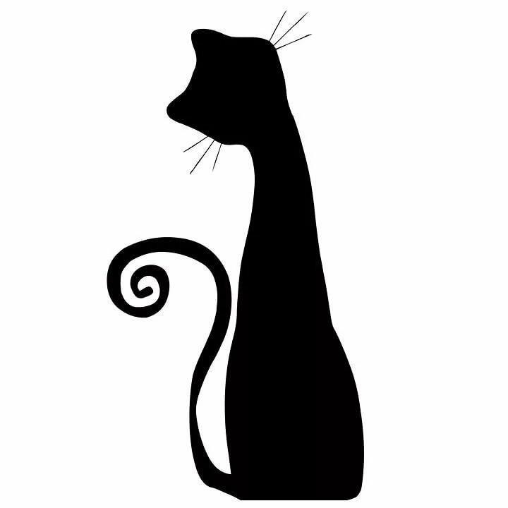 Картинки кошки изящные