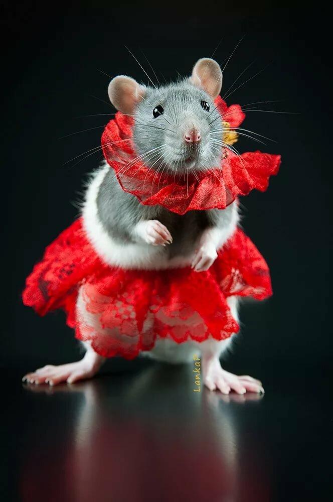 мышки фото красивые и смешные вот тоже однажды