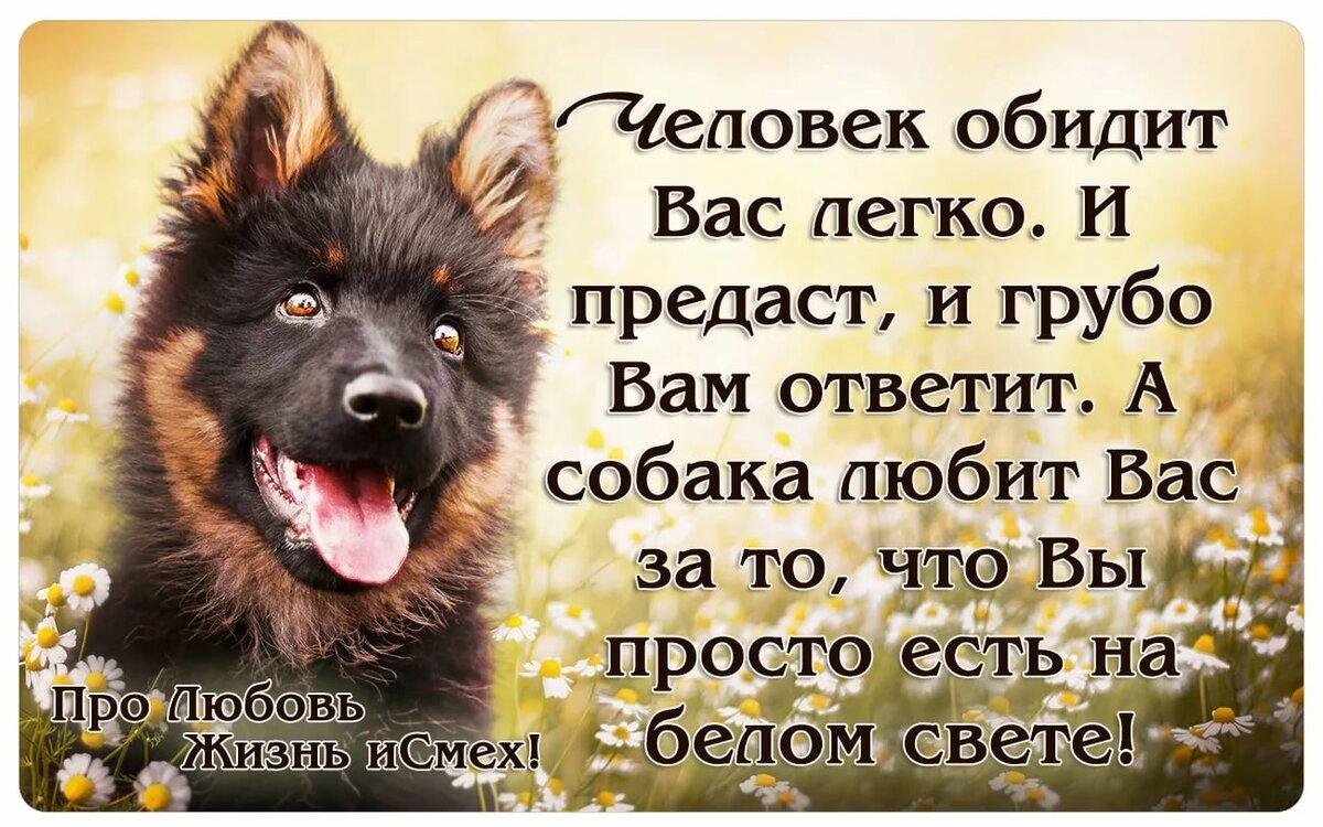 частоте картинки цитаты про собак дивизия дзержинского