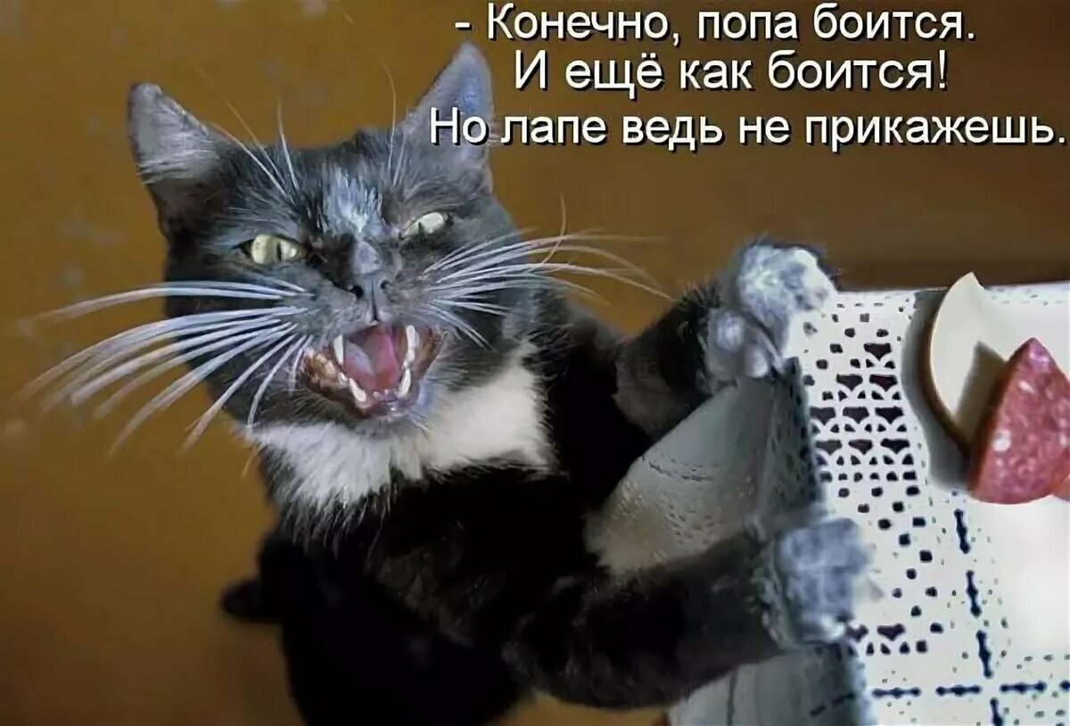 Самые ржачные картинки про кошек с надписями