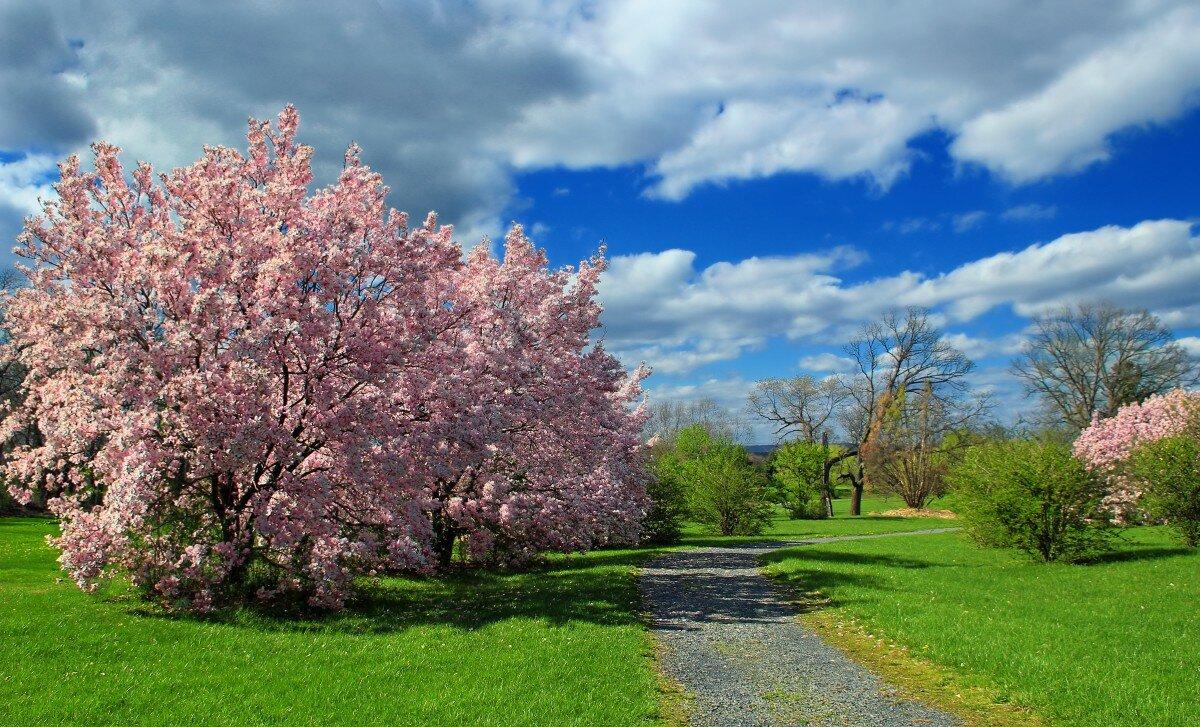 фото цветущая весна весенние пейзажи корейцы