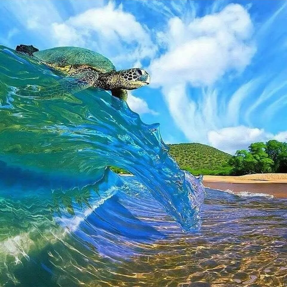 Позитив моря картинки