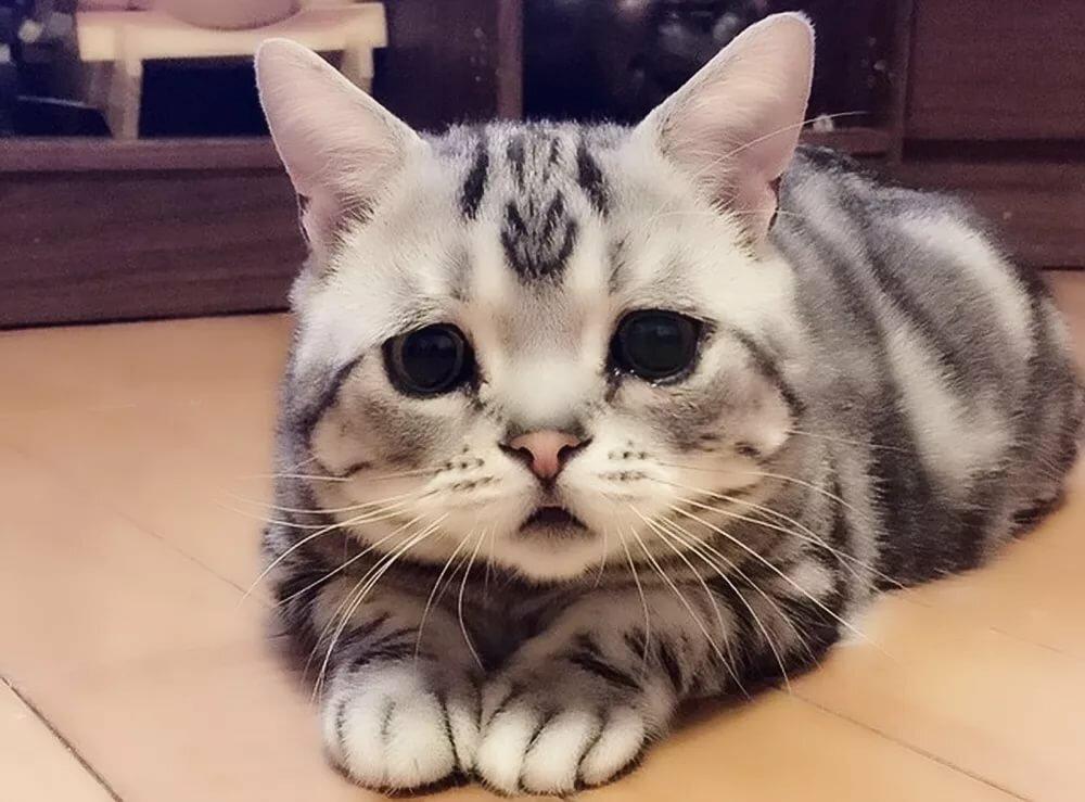 фото котенка расстроенного результате она