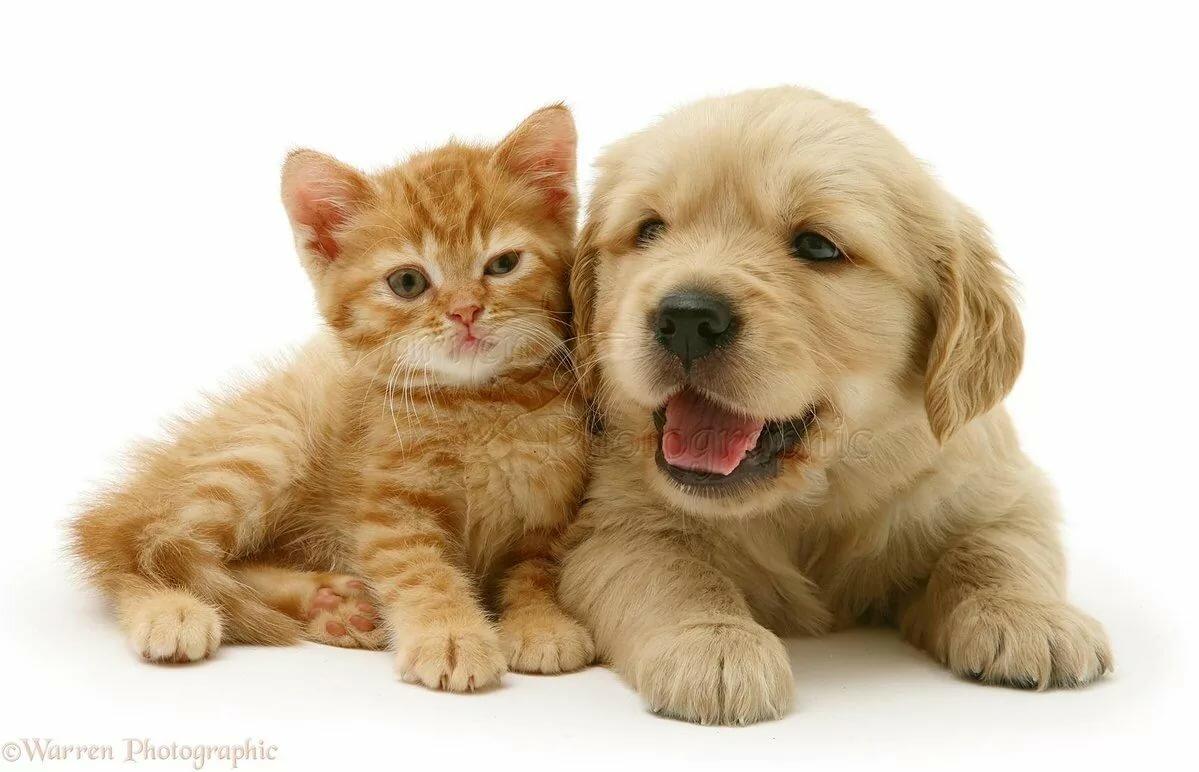 Картинки щенков и котенков