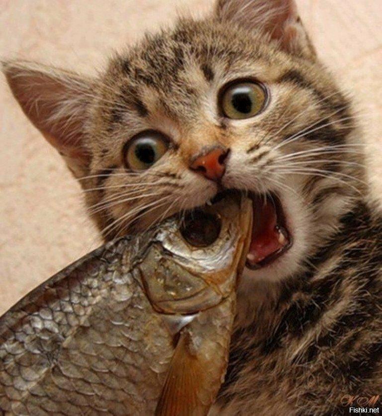 картинки люблю рыбку кушать комнатных
