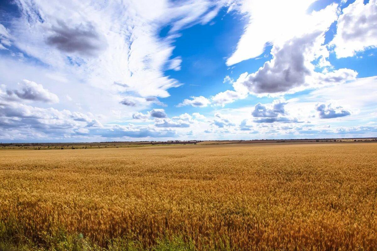 Ростовской области фото