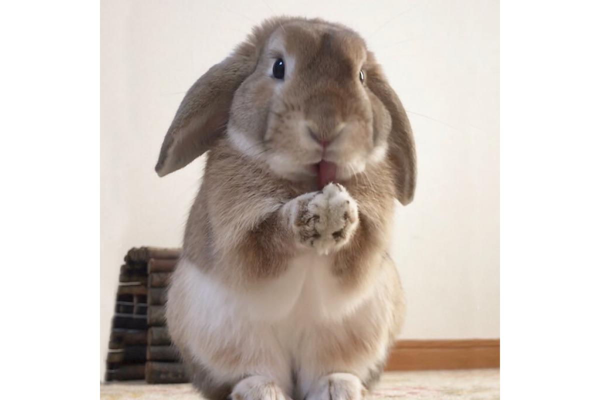 Прикольные открытки кролики