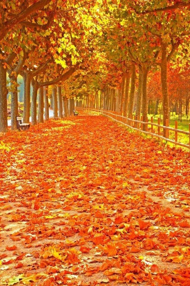 сделать осень вертикальные картинки сентябрь нескольких