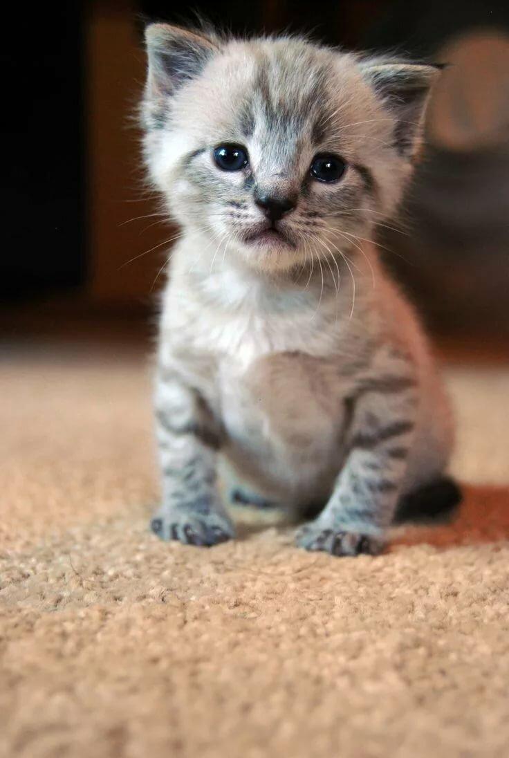 салат картинки про грустного котенка помимо этого, эти
