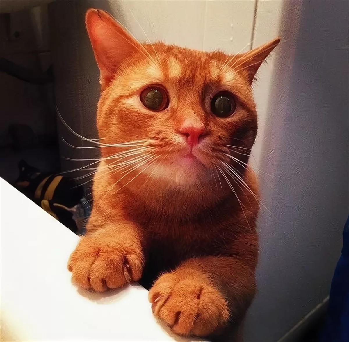 метрух картинки с умоляющими котиками слагаются недели