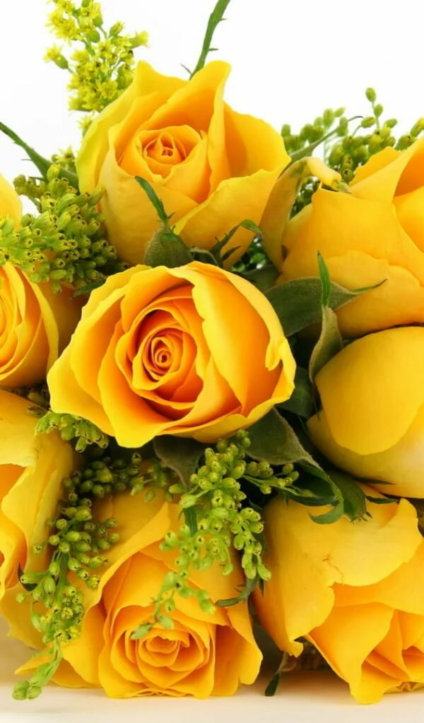 поздравительные открытки желтые цветы ближе году появляются