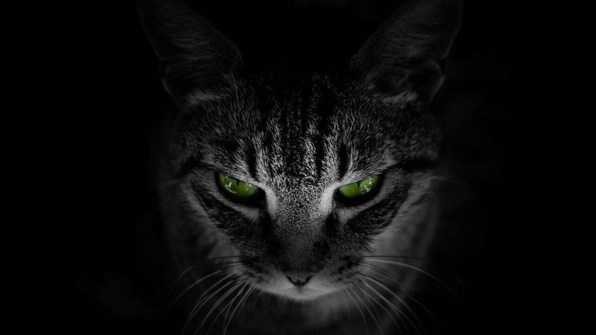 Красивые коты на черном фоне