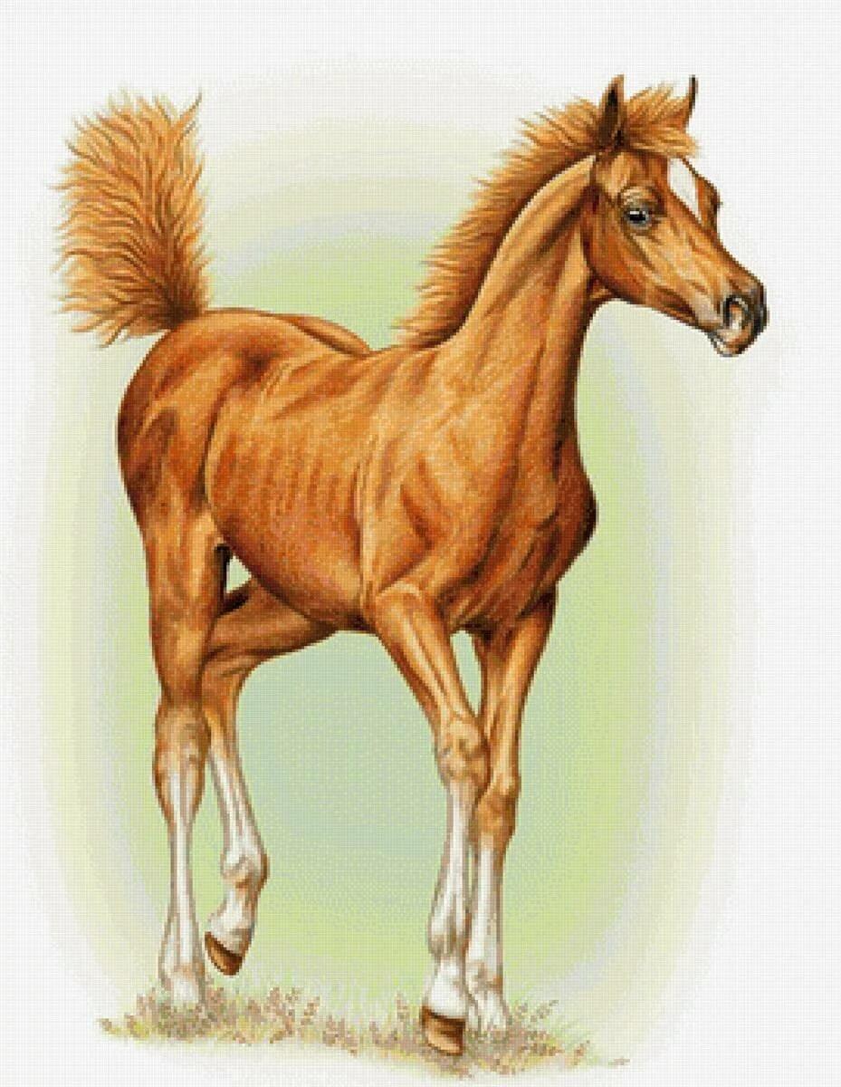 Картинка лошадки рисованная