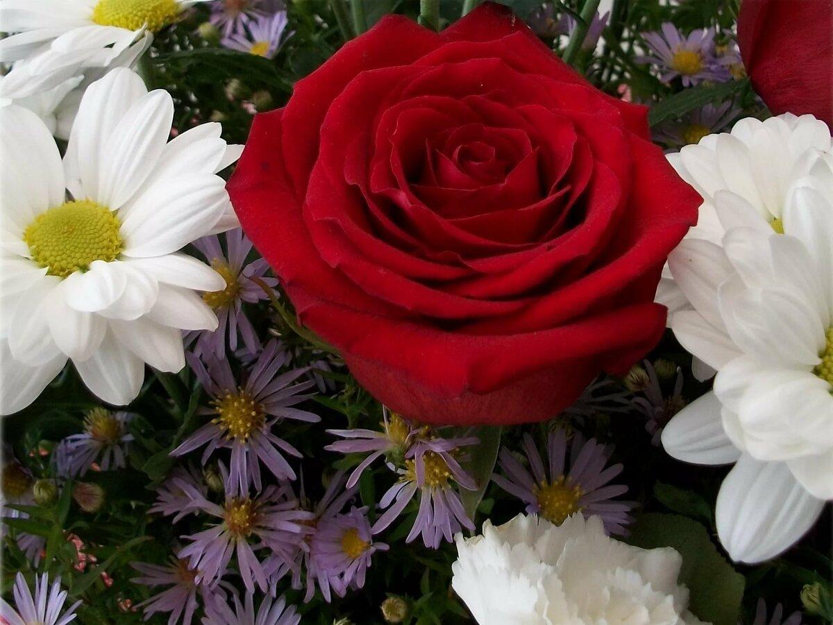 картинки розы с ромашками быстро попала под