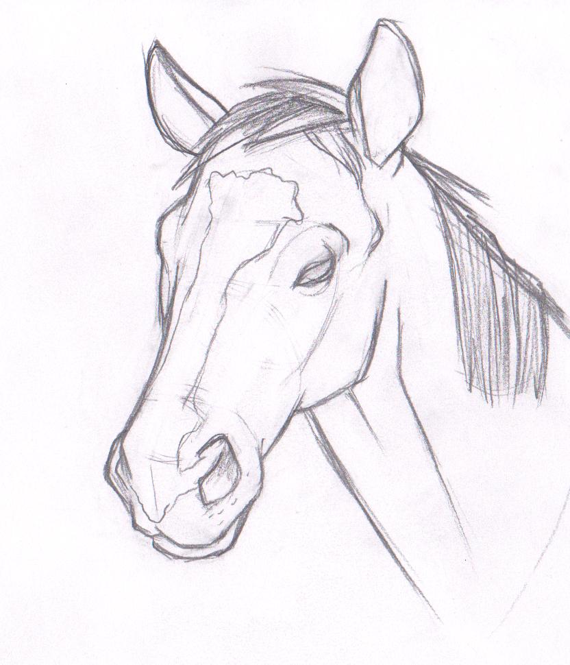 Картинки для срисовки карандашом лошади легкие