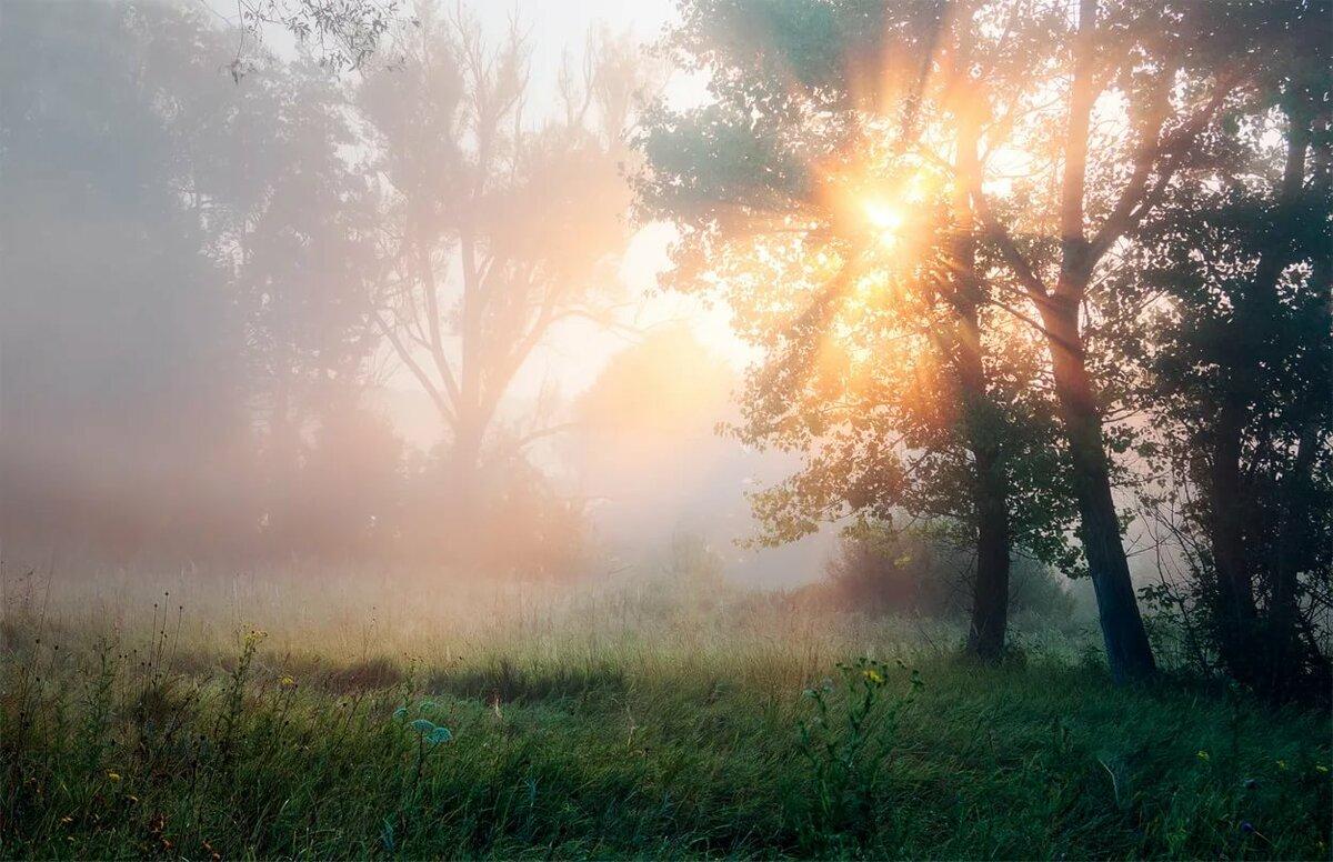 солнечное утро картинки и фото самостоятельном