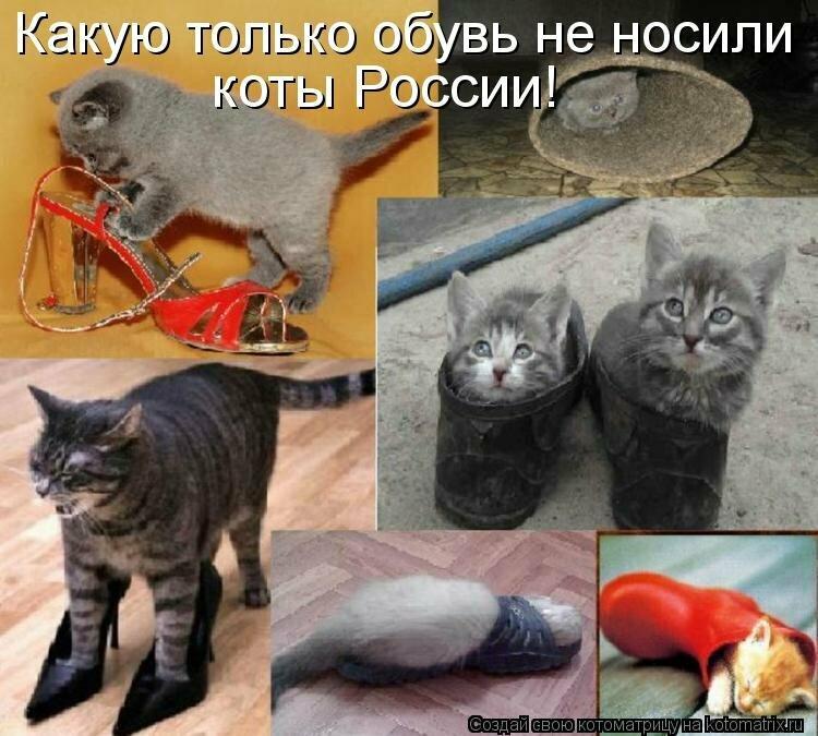 Картинки с кошками и смешными надписями