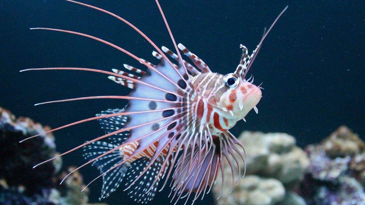 картинки экзотических рыб с названиями также