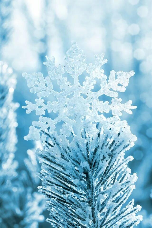 картинки на телефон снежинки в хорошем качестве ярких