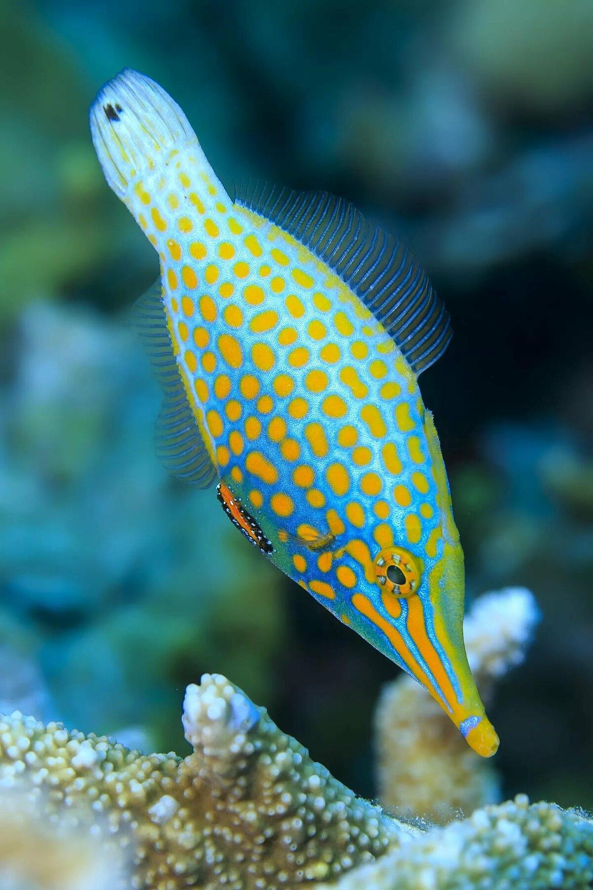 каподимонте редкие рыбы с картинками дорогой