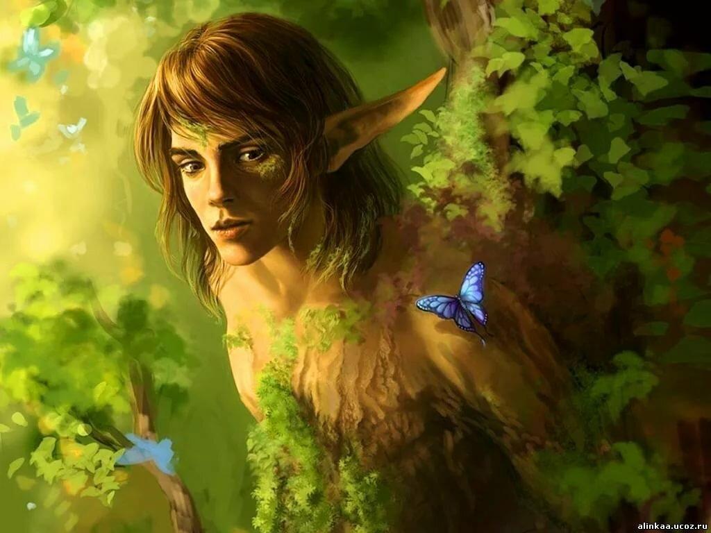 Картинки лесные эльфы