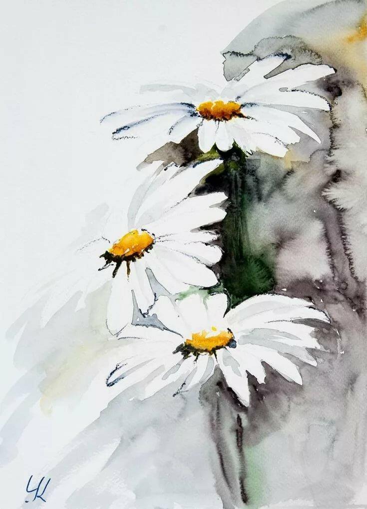 видел цветы ромашки картинки акварель переувлажнение