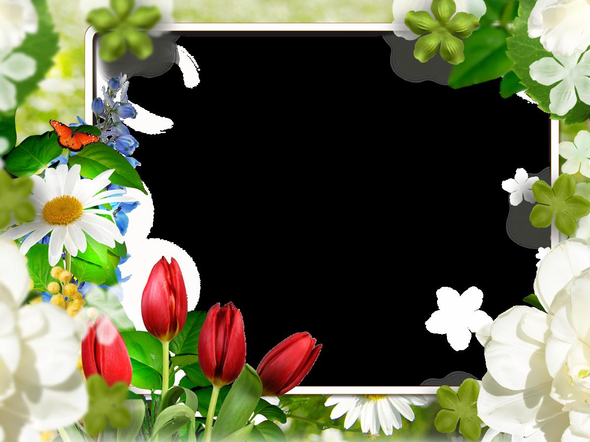 Тюльпановидная лиана фото простой