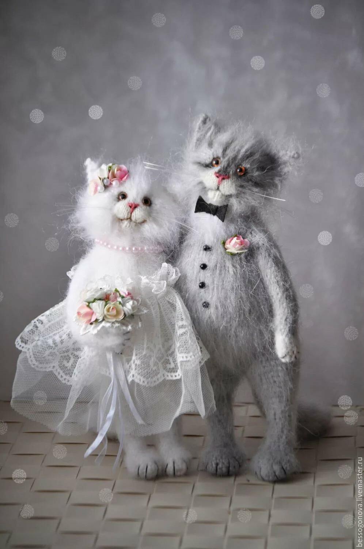 Картинки с годовщиной свадьбы с котами