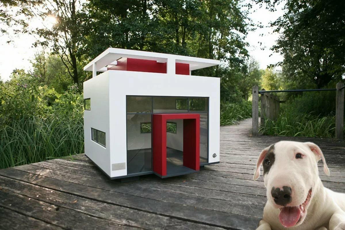 Картинки дом собака