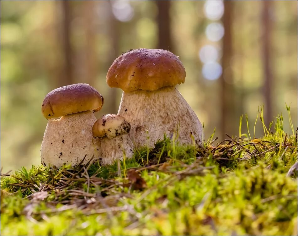 поделиться картинки семейка грибов портрет фигаро