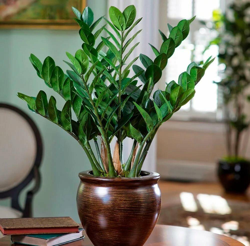 конструкция комнатные цветы уход в домашних условиях фото всю свою простоту
