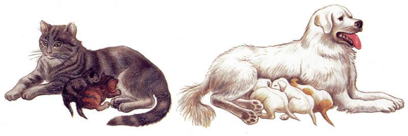 Рисунок собаки и кошки в жизни человека