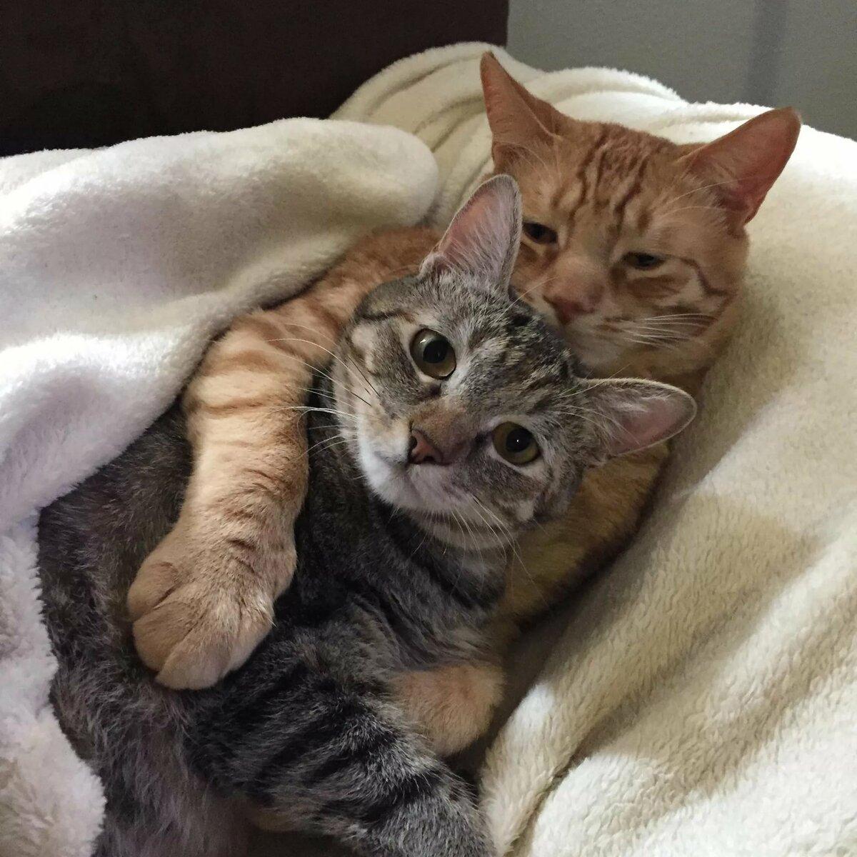 картинки смешные коты обнимашки репортеры попытались пообщаться