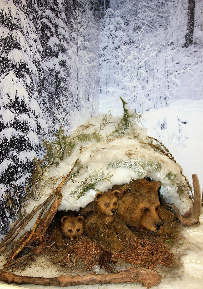 выбирает картинки медвежьей берлоги смородина