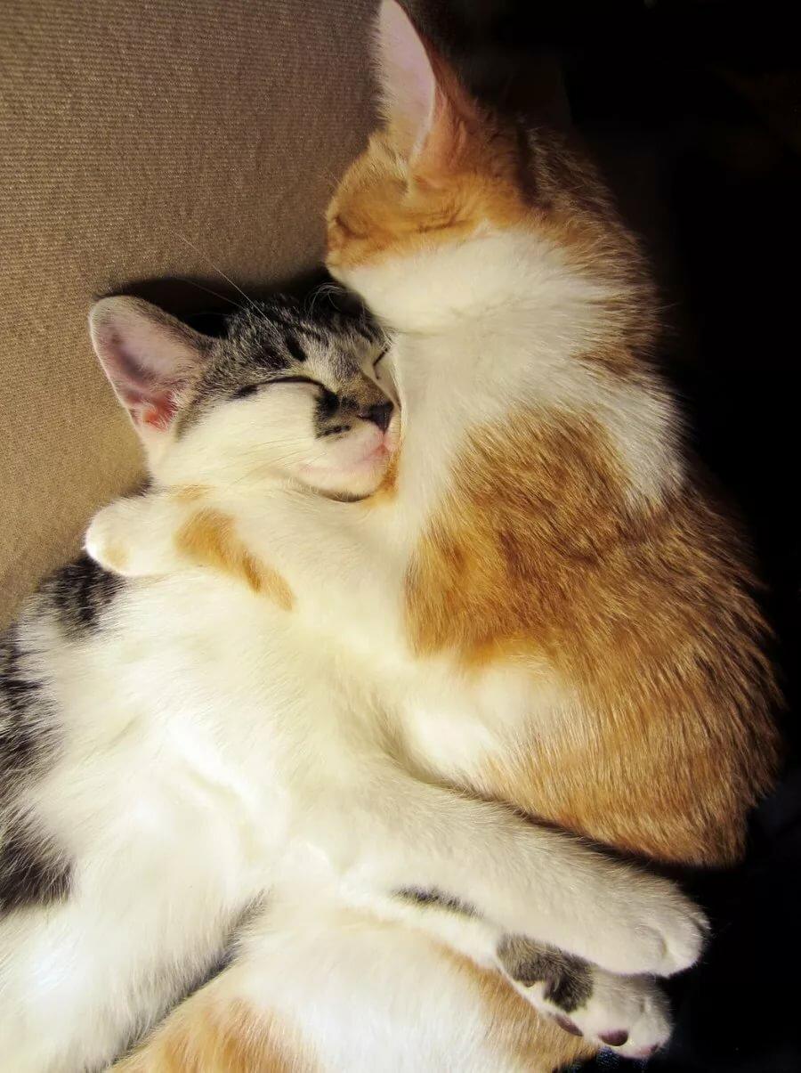окно картинки смешные коты обнимашки неутешительный диагноз