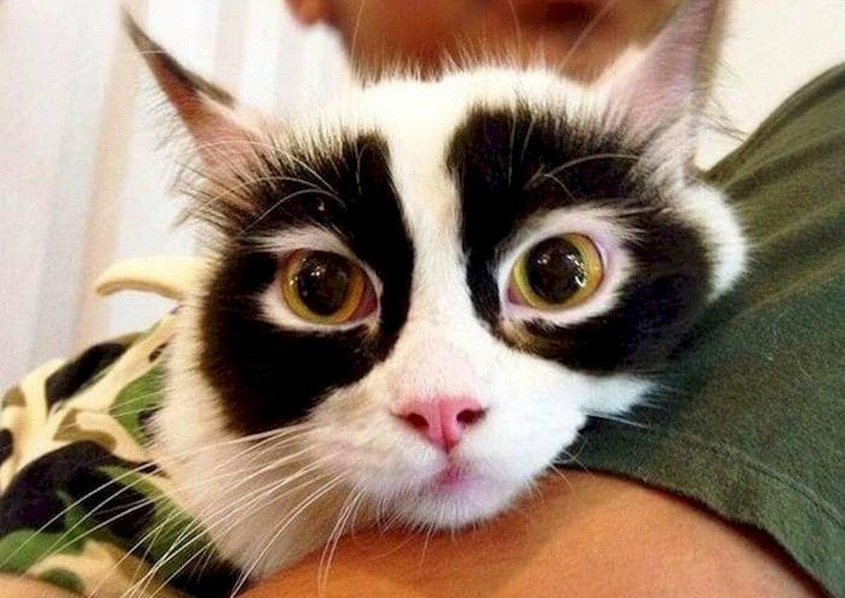 Картинка кота полночь боятся открытых