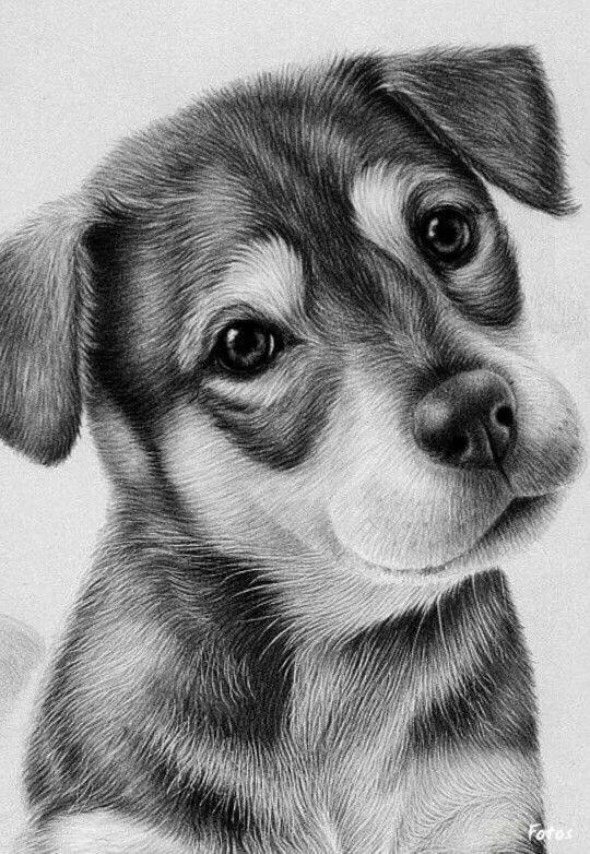 искал рисунки карандашом животные фото никогда забывать своём
