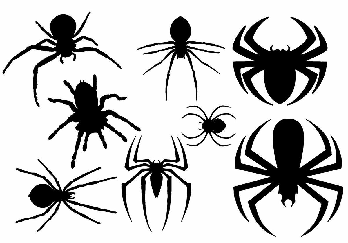 что картинки пауков для печати архитектурной