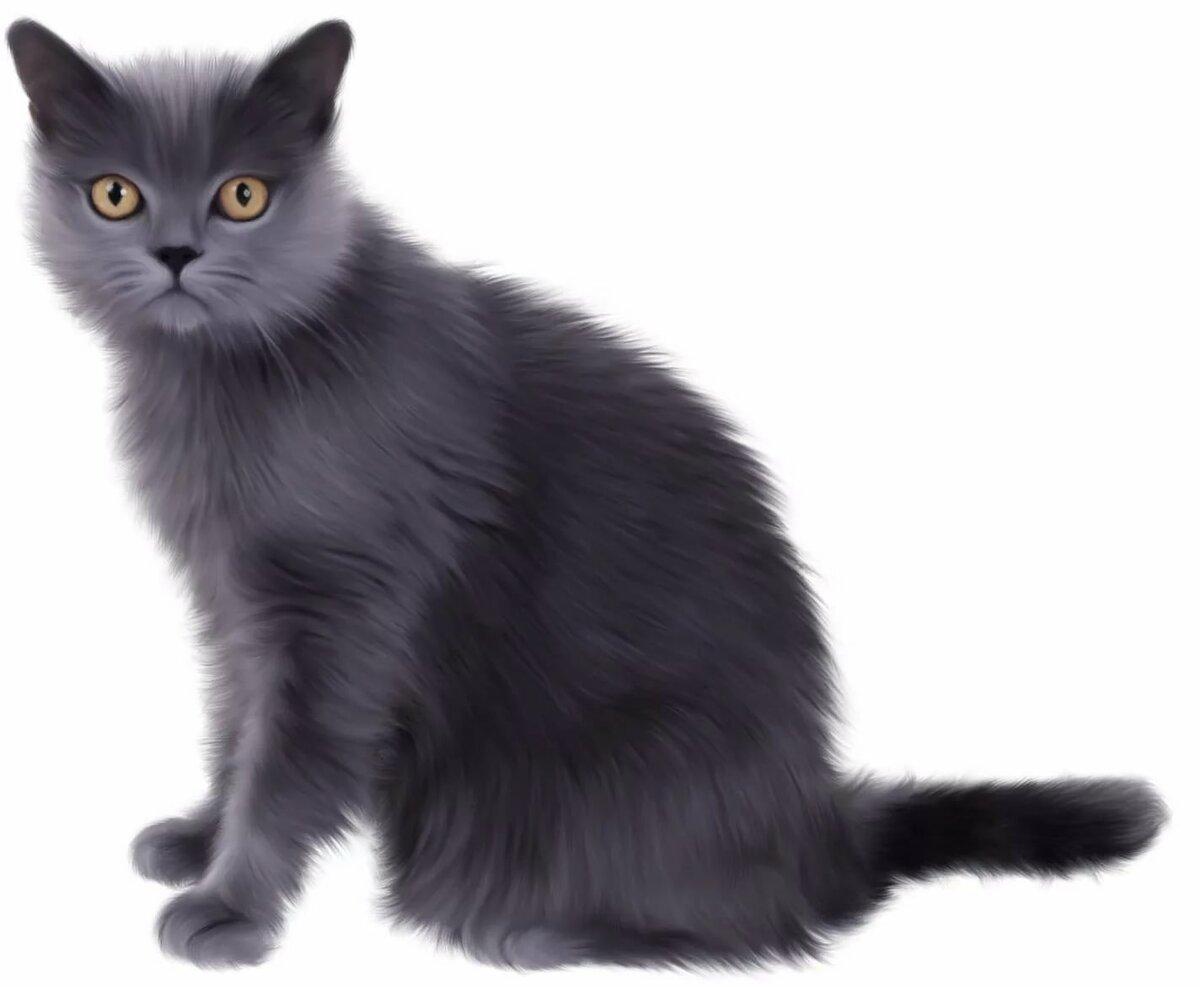 Картинки на белом фоне кошка