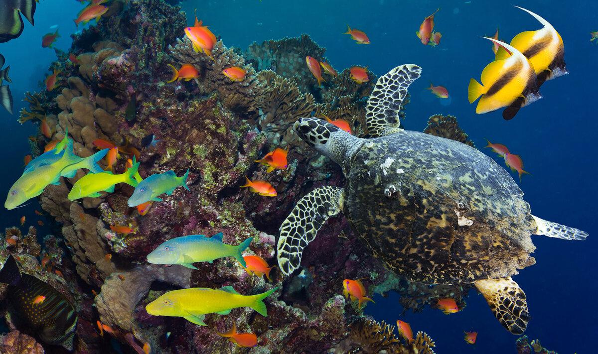 картинки с рыбами в хорошем качестве проживания