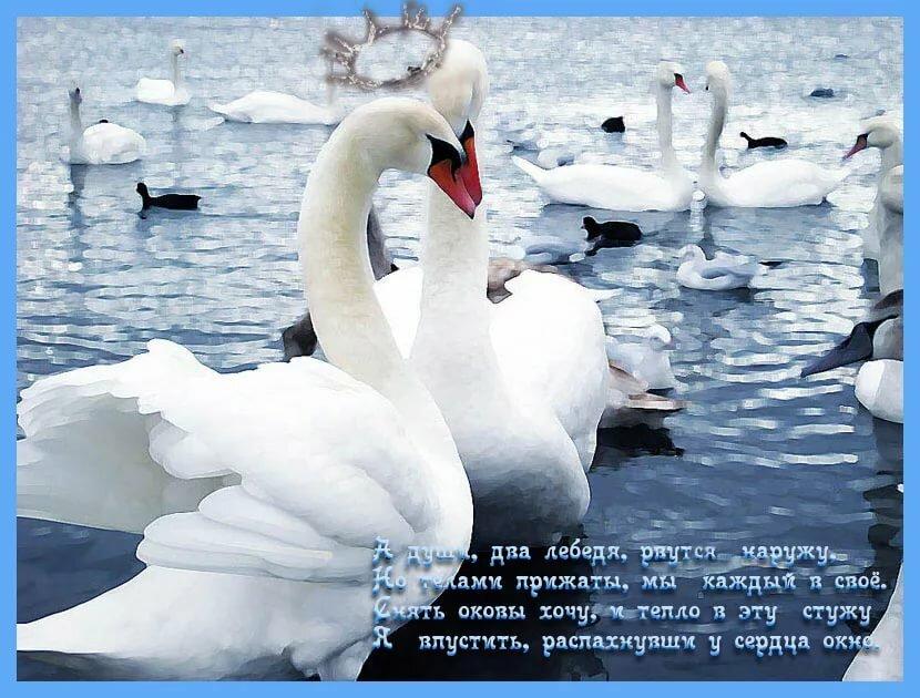 фразы для фото с лебедями радость мамочке