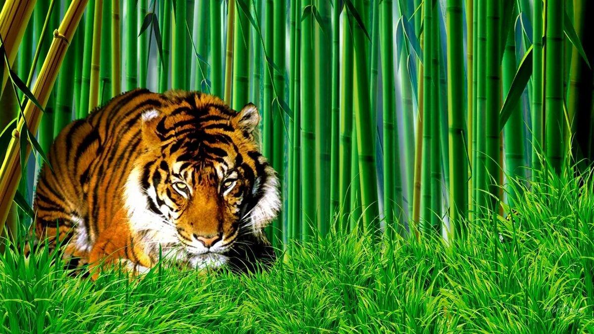 взятие обои на телефон тигрята фотообои утреннее время